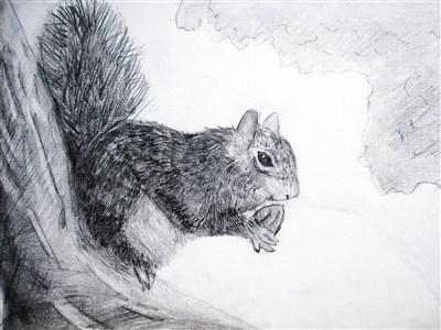 快乐涂鸦簿 -- 觅食的小松鼠