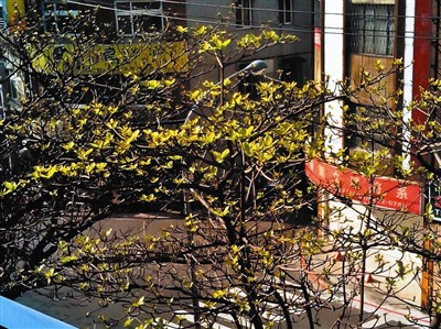 捷运窗外的春天景色