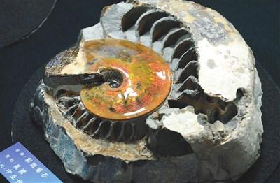七千万年前古生代的寒武纪