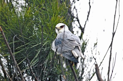 红眼黑白动物图片唯美