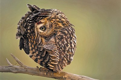 野生动物摄影奖 全球投票