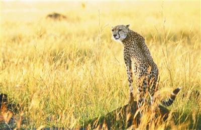 人类猎捕 野生动物锐减52%