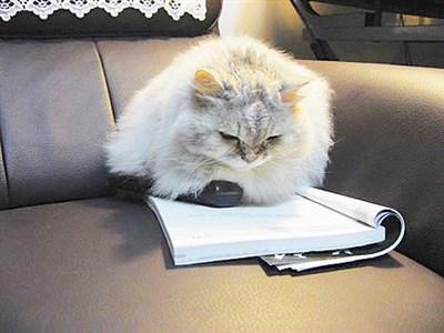 生活快门 猫也爱看书?